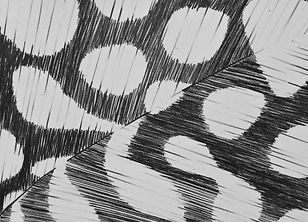 feather drawing detail.jpg