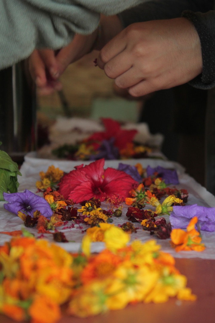Flores Taller teñido