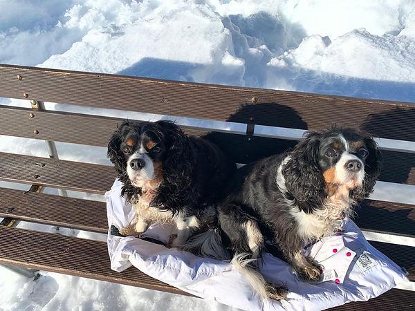 chiens sur banc au golf.jpeg