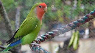 Des oiseaux trop mignons et inséparables