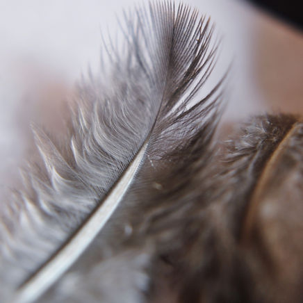 bird-feathers-1_edited.jpg