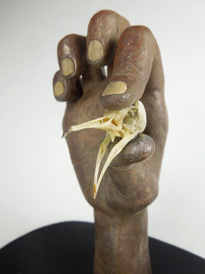 susi lopera sculpture, ceramic face, susi lopera art, susi lopera, surrealist art, ceramic sculpture, figurative ceramic art, hand sculpture, hand art, bird art, bird skeleton, bird skeleton art, bones art, bird skull art, pigeon skull, cardinal bird skull, quail skull, bird bones art, bones art, bones sculpture