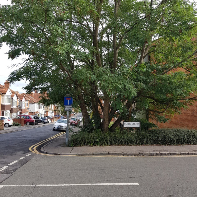 Tree | Branksome Court
