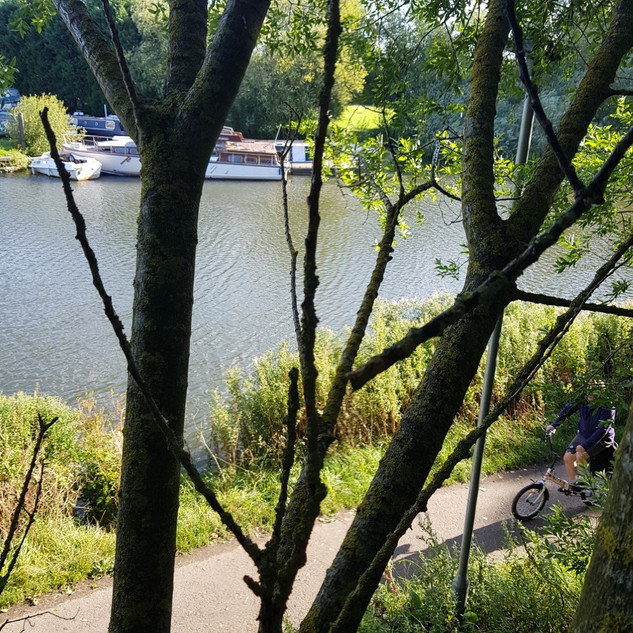 View from tree on Thames Path