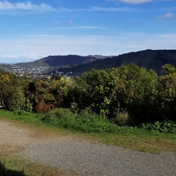 View from Ancient tree | Te Ahumairangi