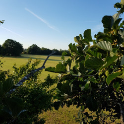 View from Beech | Thames Path