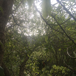 View from Marae Track Tree #3