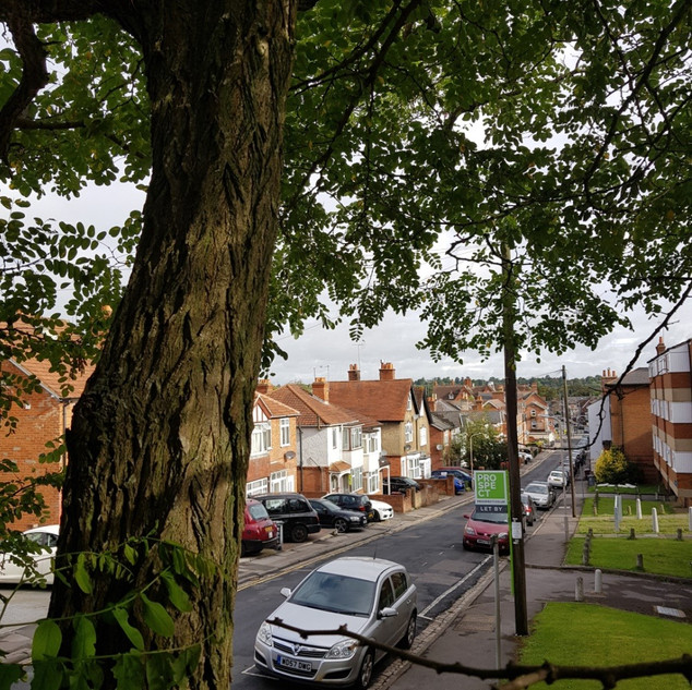 View from tree | Branksome Court