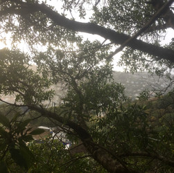 View from Tawatawa Reserve tree