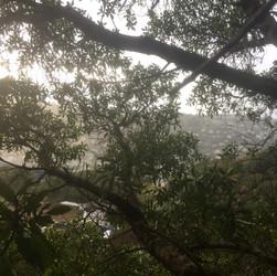 View from Tawatawa Reserve tree