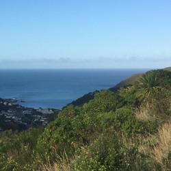 View from dead tree |  Tawatawa Reserve