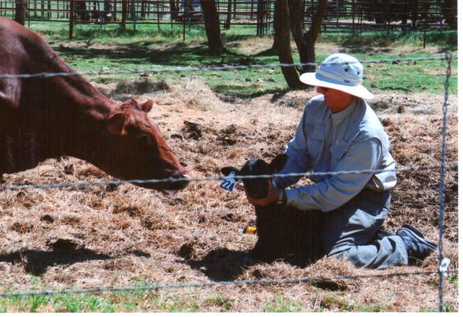 Selecting Breeding Stock