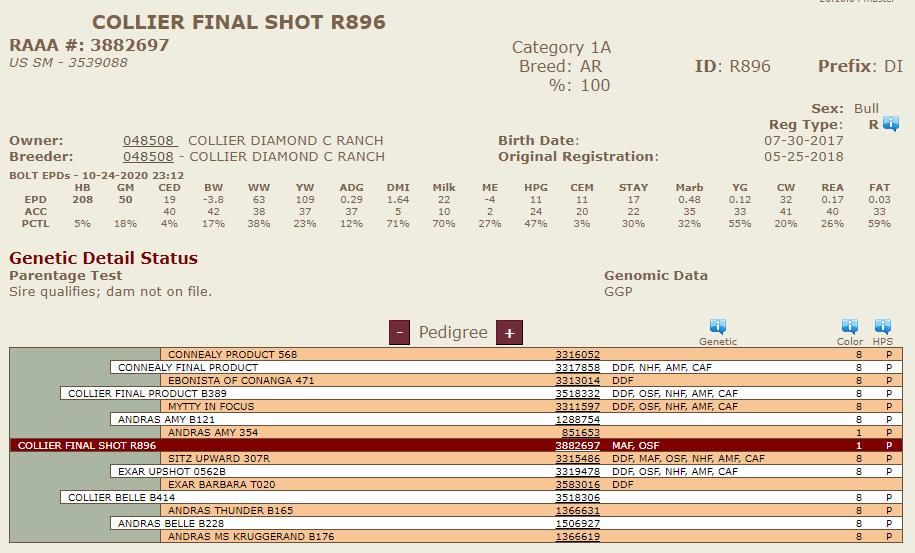 R896 (Collier Final Shot) - Diamond C Bred & Raised Sire