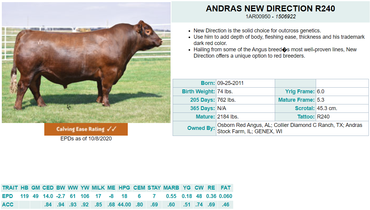 Andras New Direction R240 - Diamond C AI Sire (Bred & Raised)