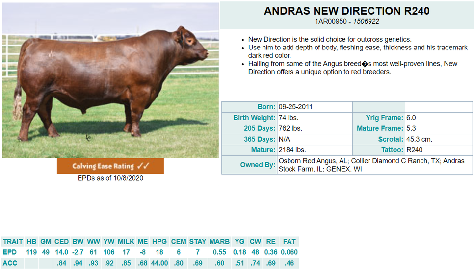 Andras New Direction R240 - Diamond C AI Sire (Bred & Raised)