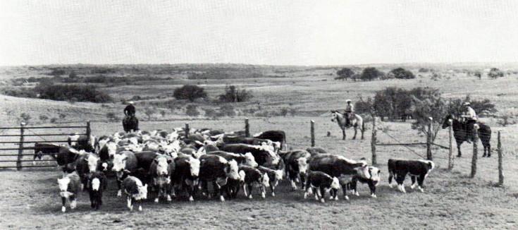 Beef Cattle Improvement (BCI)