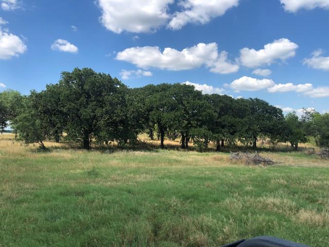 Trees Galore!
