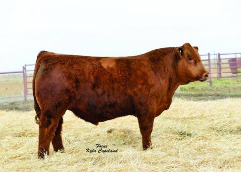 WS All Aboard B80 - Simmental AI Sires (No Ownership)