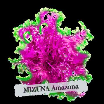 MIZUNA%20amazonian_edited.png