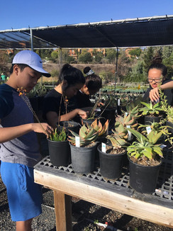 Fall 2018 Shadetree Nursery Volunteer Event