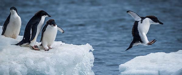 Jumping penguin.jpg