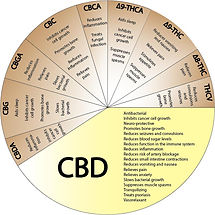 CBD-circle-for-ailments.jpg