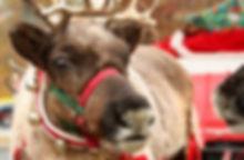 Xmas-reindeer-300x200.jpg