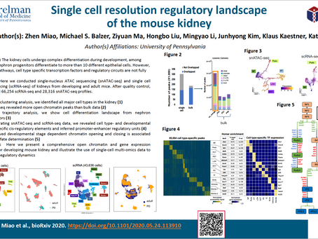 Single Cell Resolution Regulatory Landscape of the Mouse Kidney
