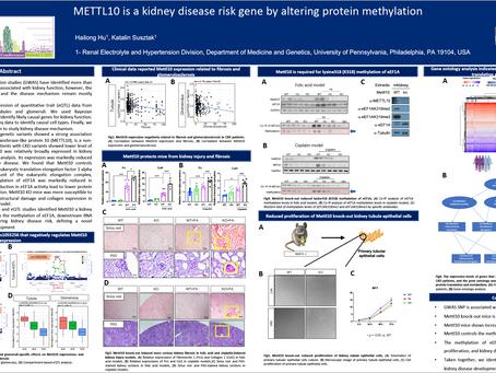 METTL10 is a Kidney Disease Risk Gene by Altering Protein Methylation