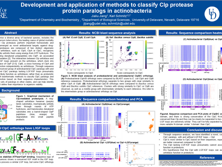Development and Application of Methods to Classify Clp Protease Protein Parlors in Actinobacteria