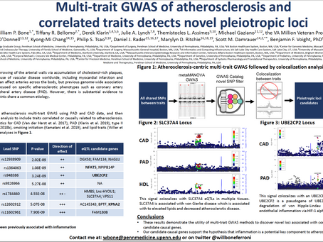 Multi-trait GWAS of Atherosclerosis and Correlated Traits Detects Novel Pleiotropic Loci