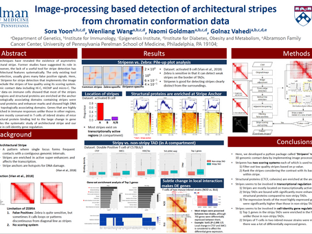 Image-processing Based Detection of Architectural Stripes from Chromatin Conformation Data