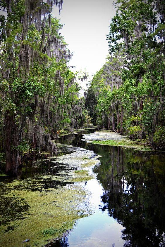 new swamp