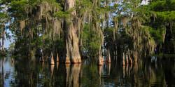 new_orleans_swamp2