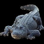 Alligator_new_orleans.png