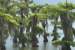 new_orleans_swamp3