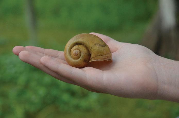 swamp_shell