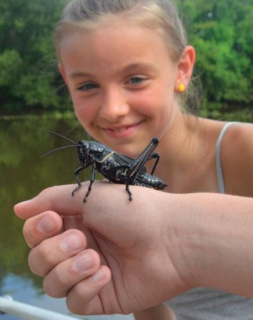 swamp_grasshopper