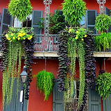 french quarter neighborhood.jpg