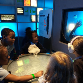Year 2 enjoy the Natural History Museum