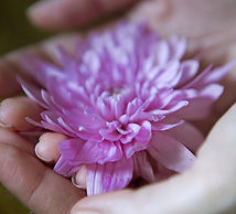 lotus in hand.jpg