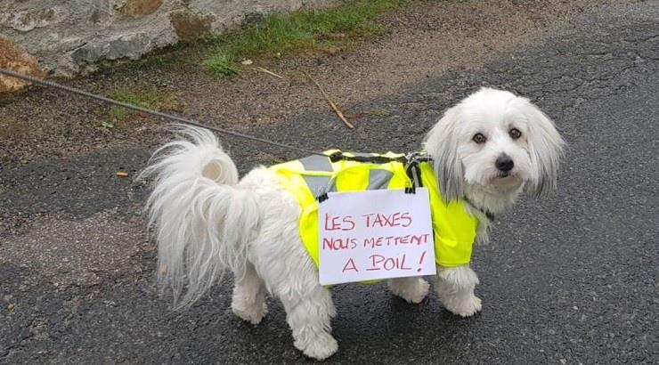 chien-manifestant-740x410