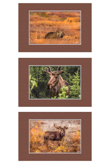 "Wildlife 8""x12"" Matted Prints"