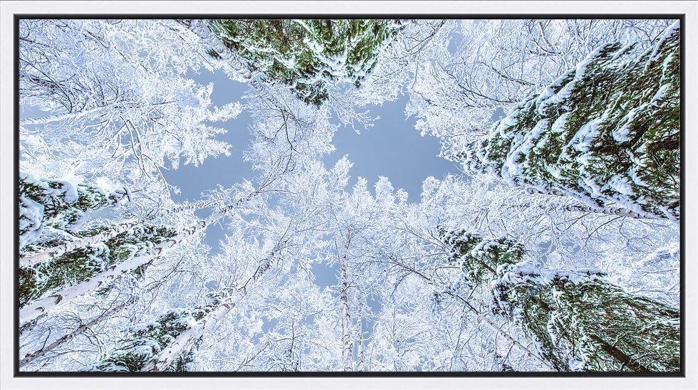 Winter Above