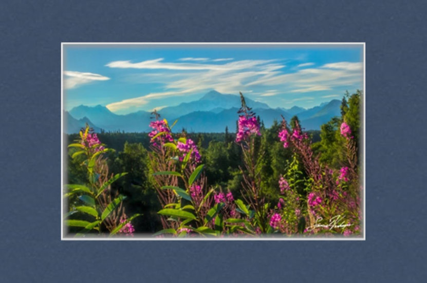 """Silhouette Denali Fireweed 8""""x12"""" Matted Print"""