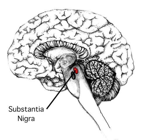 Parkinson's Disease Substantia Nigra