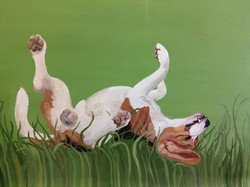 beagle rolling in clover!