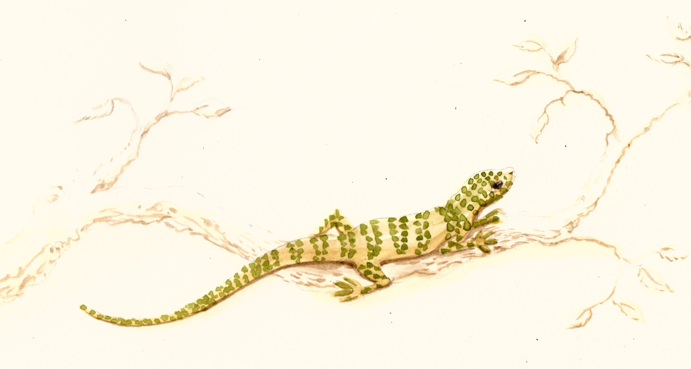 sketch for a lizard