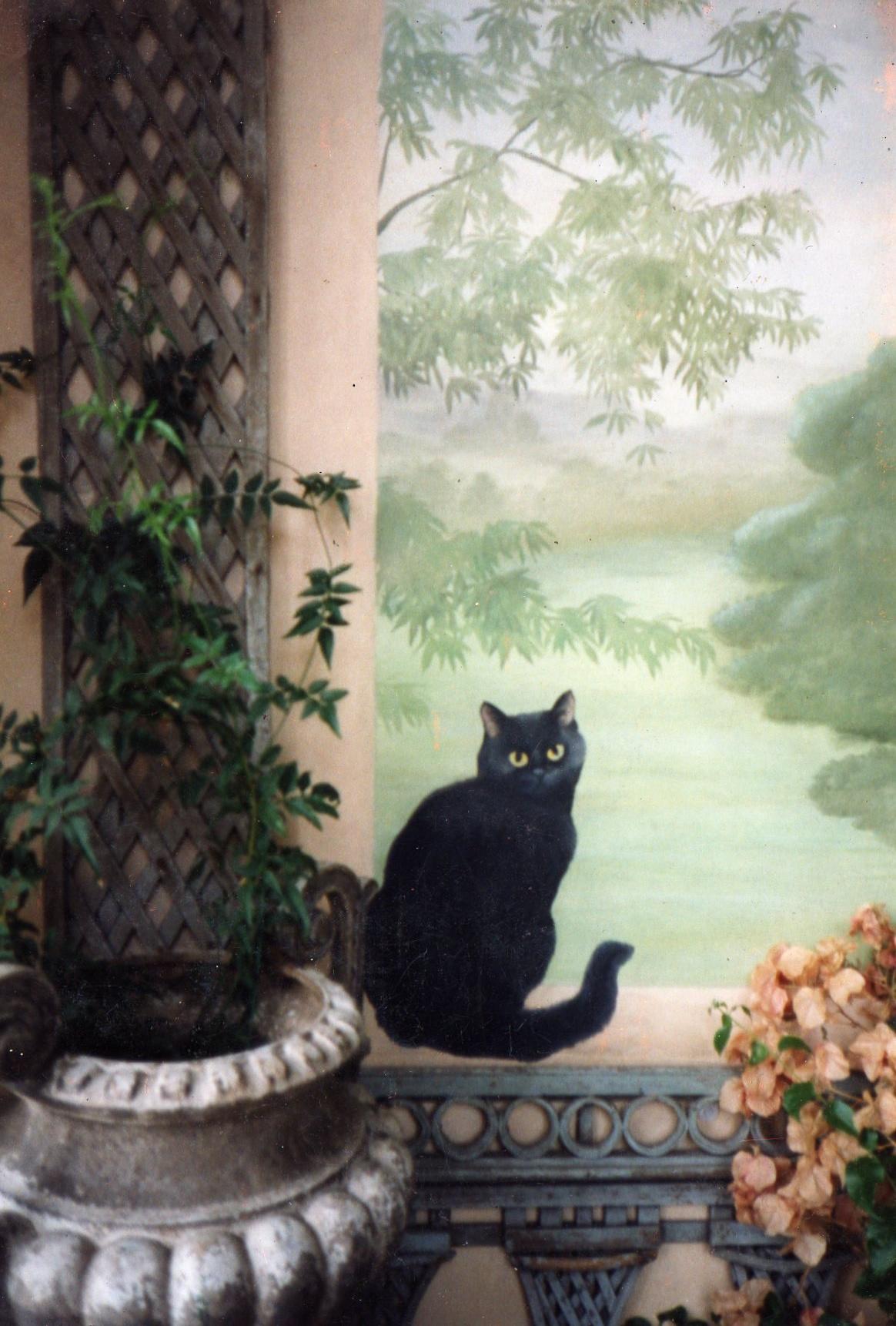 philamore gardens cat