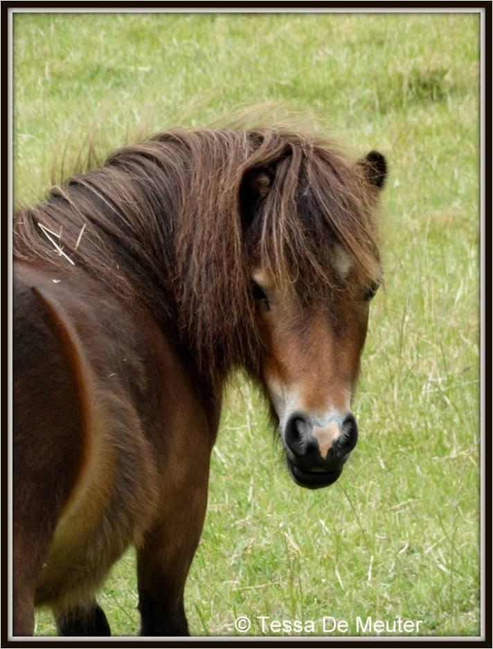 Paard Vino